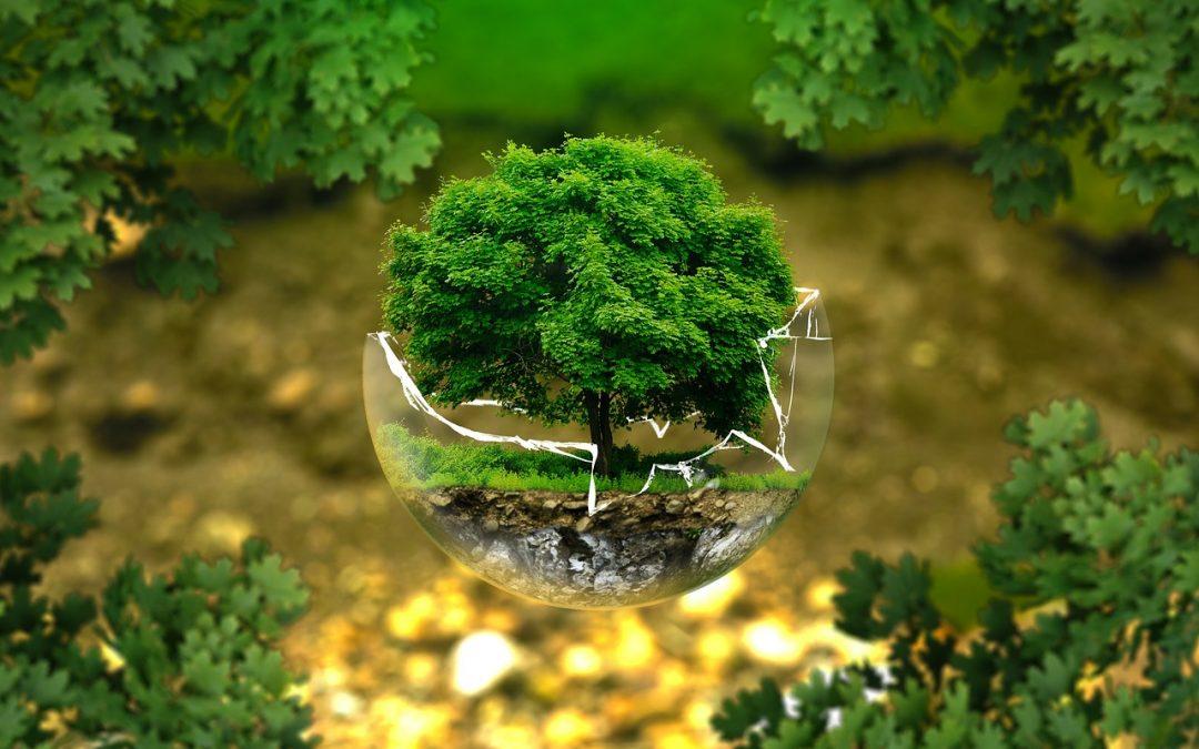 Reducció de químics per una neteja més ecológica