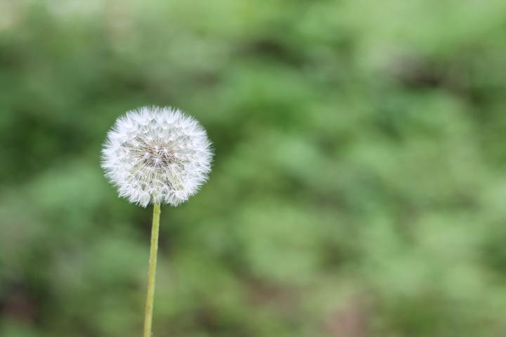 4 consejos de limpieza doméstica para personas alérgicas